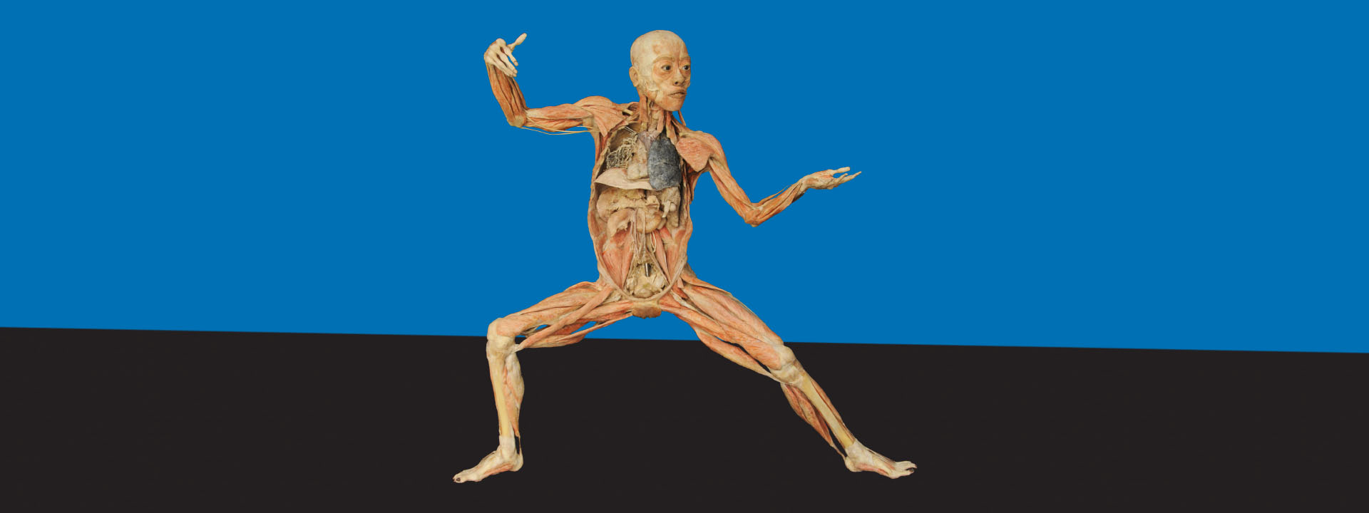 O que anatomia humana