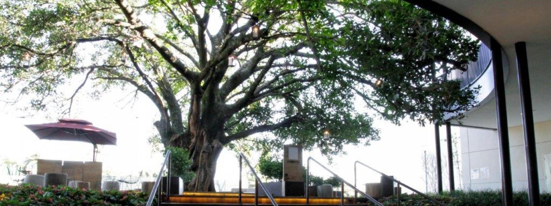 Iguatemi São José do Rio Preto  f11794dbca3